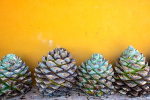 Blue Agave and a Yellow Wall