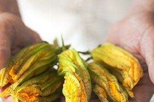 Pumpkin flowers in male hands