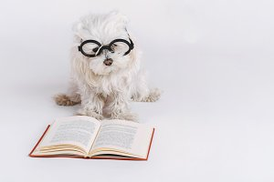 funny dog with glasses and a book