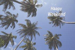 weekend coconut tree on the beach