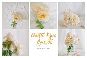 Pastel Rose Bundle - Stock Photos