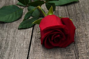 Red rose on a old wooden background