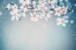 Springtime blossom background