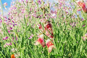 Colorful summer flowers in field
