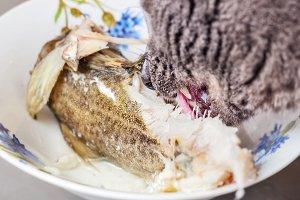 Cat eating part of fish