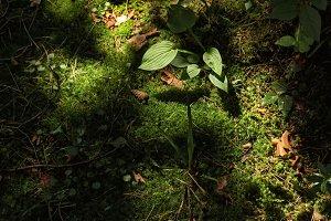 Deep green forest moss