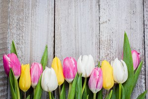 Spring Background Colorful Tulips