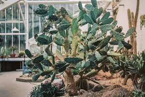 A photo of a cactus