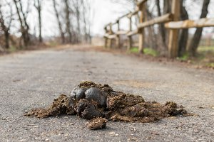 Big horse droppings on an asphalt ro