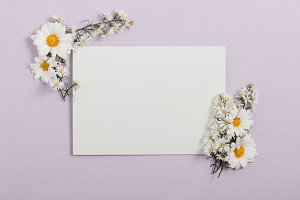 Violet Invitation with White Flowers