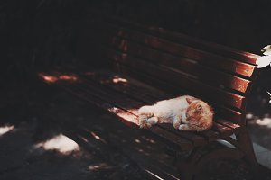 Red kitten sleeping on the bench