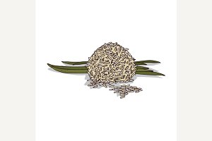 Isolated clipart Rice