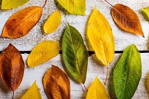Sudio shot of autumn time.