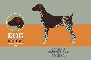Dog breedsGerman shorthaired pointer