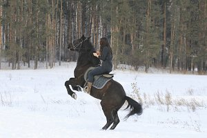 Young black haired woman on top a bay horse in winter forest