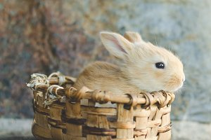 Rabbit in wooden basket.