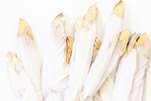Feathers With Gold Styled Stock
