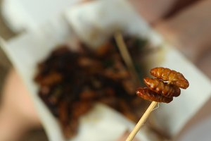 silkworm on japanese stick on the roasted insect mixture