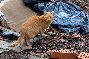 Stray cat outdoors between junk