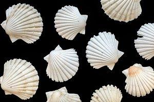 Seashells isolated on black background