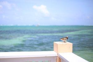 Island Bird on a dock