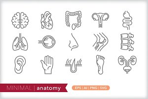 Minimal anatomy icons