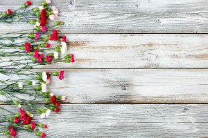 Colorful Carnations on aged wood