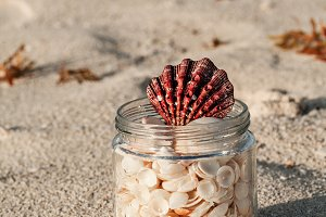 Shells In A Glass Jar On The Beach