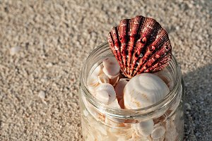Closeup Of Shells In A Glass Jar