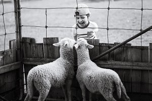 Happy boy in discussion with lambs.