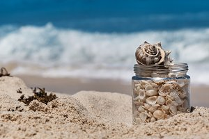 Shells In A Jar On The Beach