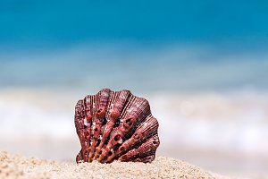 Red Seashell With Blue Sea