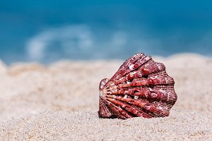 Red Seashell On Tropical Beach
