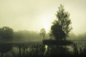 Early foggy summer morning