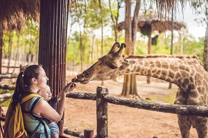 Happy mother and son watching and feeding giraffe in zoo. Happy family having fun with animals safari park on warm summer day