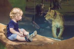 Little boy looking at little lion through glass in zoo