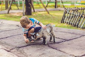 Small cute boy is feeding a small newborn goat