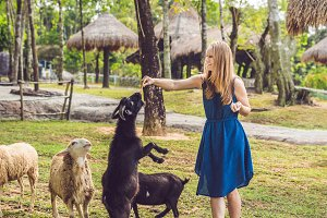 Attractive young woman feeding baby goats