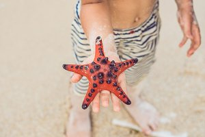 Red starfish in the hands, next to the sea