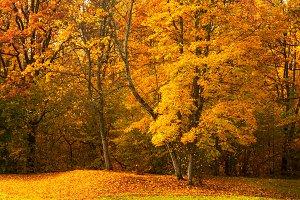 Autumn sunny day