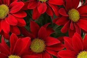 Red flower. Nature background.