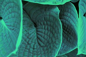 big green leafs background with texture