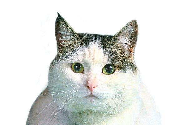 cool tom cat in santa claus garment…