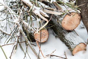 Firewood in woods covered with snow. In winter, a close-up of sawed trees. The logs collected for the fire.