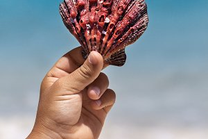 A Red Seashell In Hand Of a Child