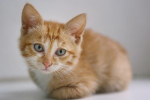 red little kitten with blue eyes on windowsill