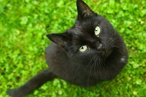 black cat on green grass from above look up