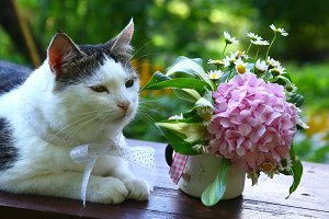 cute cat with bow and hydrangea pink flowers bouquet