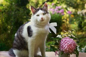 cute cat with bow and hydrangea pink flowers