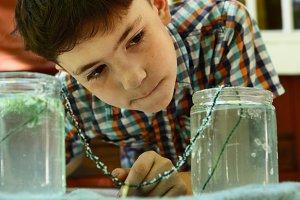 keen preteen boy grow salt crystal watch crystallization from solution